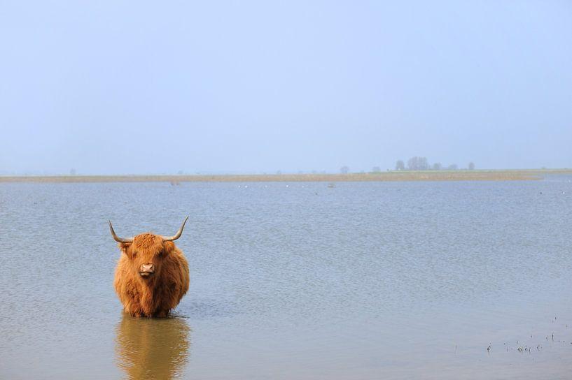Schotse hooglander bij Tiengemeten van Ivonne Wierink