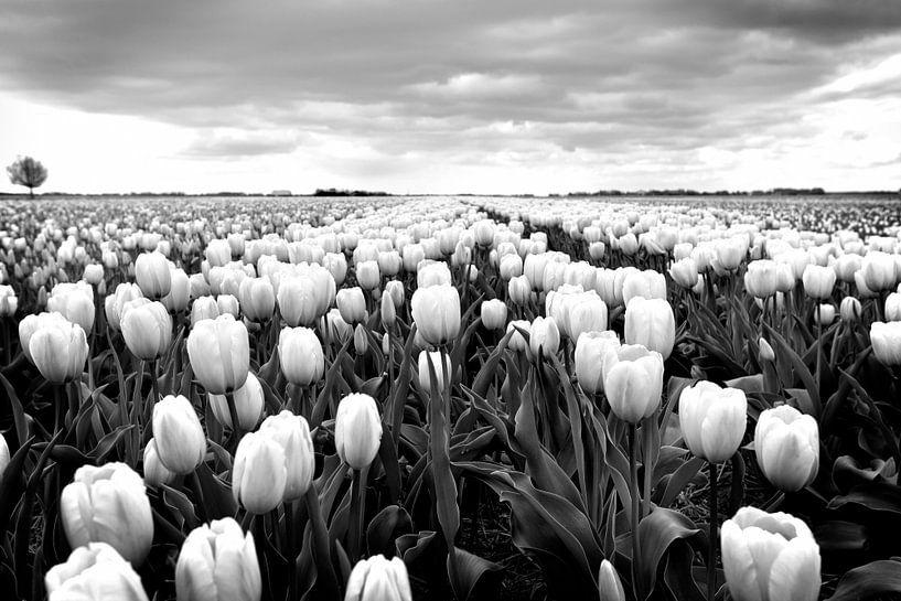 Tulpenveld, Nederlands landschap (zwart-wit) van Rob Blok
