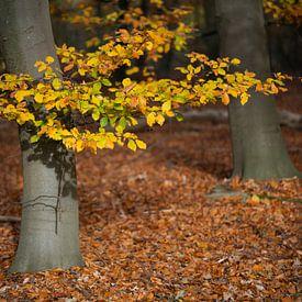 Zonnestralen in de herfst op kleurrijke herfstbladeren in een bos nabij Winterswijk in de Achterhoek van Tonko Oosterink