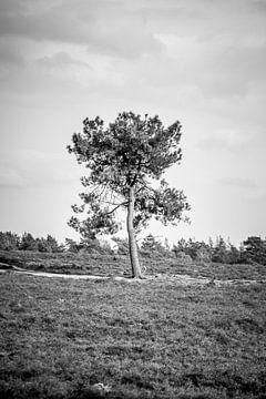 Eenzame boom van S van Wezep