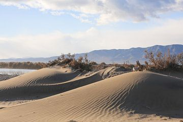 dunes sur marijke servaes