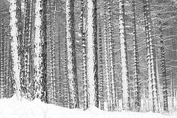 Verschneite Kiefern von Leendert Noordzij Photography