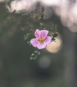 Blumen Teil 148 von Tania Perneel