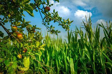 Ostsee Äpfel von Johnny Flash