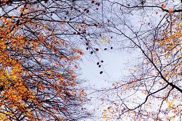 Herfst in de lucht van Greet Thijs