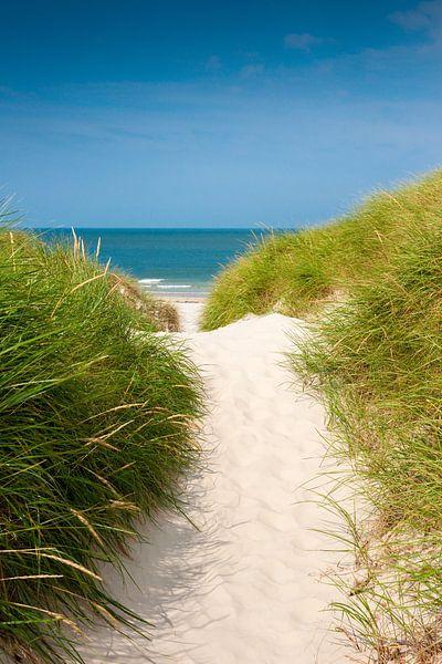Northsea pathway to the beach sur Reiner Würz / RWFotoArt