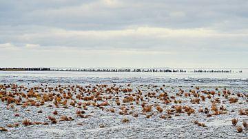 La mer des Wadden - 8 sur Rob van der Pijll