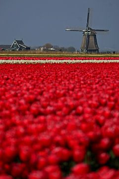 Roodveld van Peter Heins