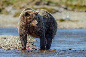 Grizzly beer met jongen