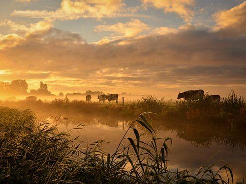Koeien in sprookjesachtig ochtendlicht van Wilma van Zalinge