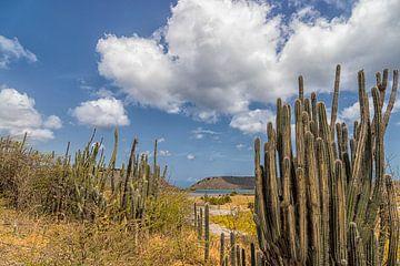 Salzpfanne / Kaktus Curacao von Marly De Kok