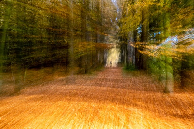 Bewogen bos van Tonia Beumer