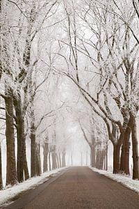 Landweg door een bevroren winters landschap in de IJsseldelta