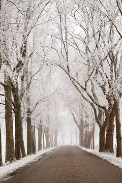 Route de campagne à travers un paysage hivernal gelé pendant un froid matin d'hiver sur Sjoerd van der Wal