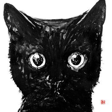 chat noir sur philippe imbert