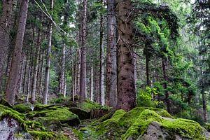 Rauhwald im Schwarzwald von Glenn Vlekke