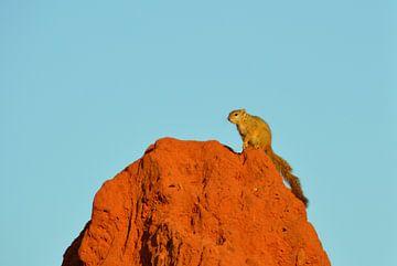 Eekhoorn op een termietenbult voor een helderblauwe lucht van Vera Boels