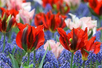 Tulpen in de Keukenhof (7) van Antwan Janssen