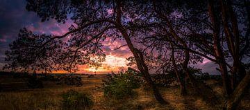 Kootwijkerzand zonsopgang van Martijn van Steenbergen