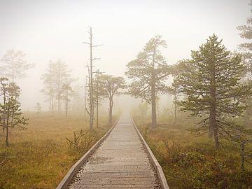 Weg in den Nebel von Marco Matznohr