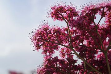 Blumen von Michelle Fluks