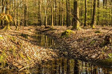 Beek in het bos van Tony Buijse