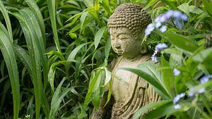 Buddha in het groen.