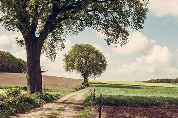 Groesbeek von Nancy van Verseveld