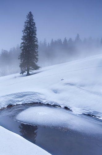 spruce tree on snow by frozen lake in winter