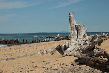 Strandvondst bij Whitefish Point Light Michigan van Henk Poelarends
