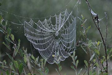 Tautropfen auf Spinnennetz von Theo van Woerden