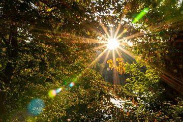 Les feuilles d'automne inondées de soleil enchantent le matin sur Christian Feldhaar
