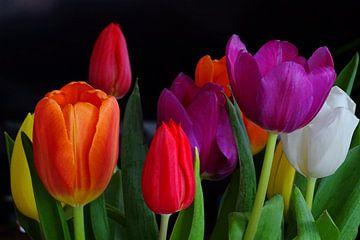 Tulpen von Yvonne Stroomberg