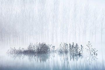Froid d'une matinée brumeuse dans le marais, David Frutos sur 1x