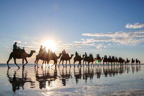Kamelen op het strand van Broome, Australië