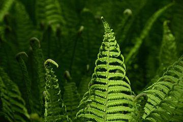jeune fougère verte sur Ulrike Leone