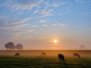 Koeien, Hengelo (gld) van Natuurlijk Achterhoek