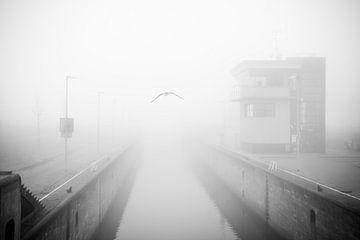 Fliegen im Nebel - Nebel, schwarz-weiß Fotografie von Fabrizio Micciche