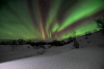Das magische Nordlicht über Lappland von Daniel Van der Brug