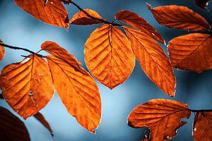 Roodkleurige herfst bladeren van Jayzon Photo