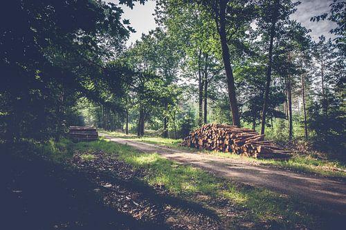 Boomstammen langs wandelpad in bos op de Veluwe