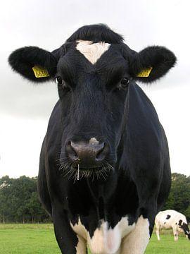 Een verkouden koe. van André Mesker