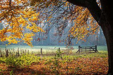 Herbstmorgen von Jose Gieskes