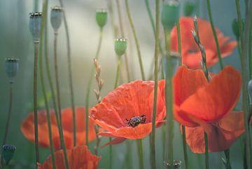 Malerische Mohnblumen von Arja Schrijver Fotografie