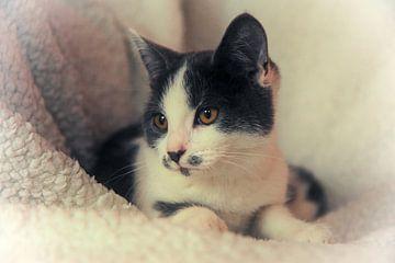 Kitten van Bianca Muntinga