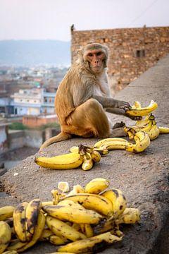 Monkey having lunch van Juul van Wandelen