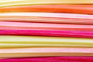 KLeurrijk patroon van snijbiet van Hilda Weges