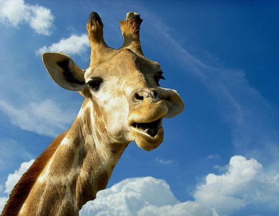 Lustige Giraffe fürs Kinderzimmer