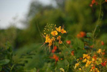 Bloemen von Irene Colen