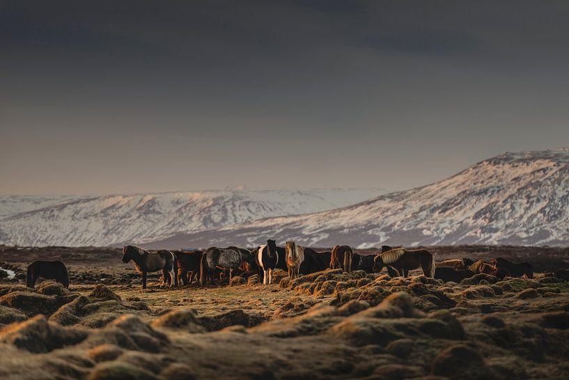 Islandic Horses I van Pascal Deckarm